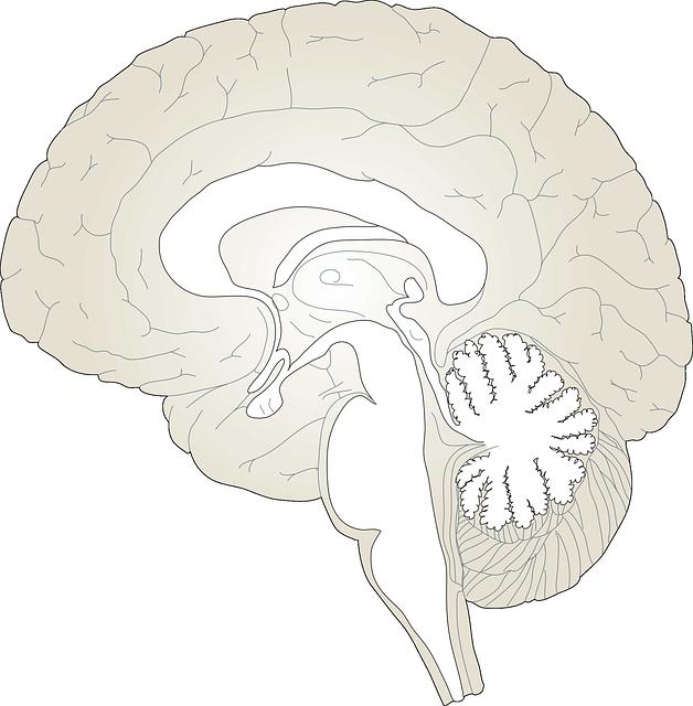 brain-150935_640.png