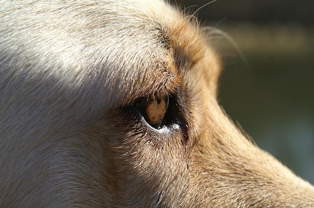 dog-104623_640.jpg