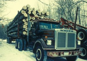 800px-A_truck_carries_many_aspen_cut_trees